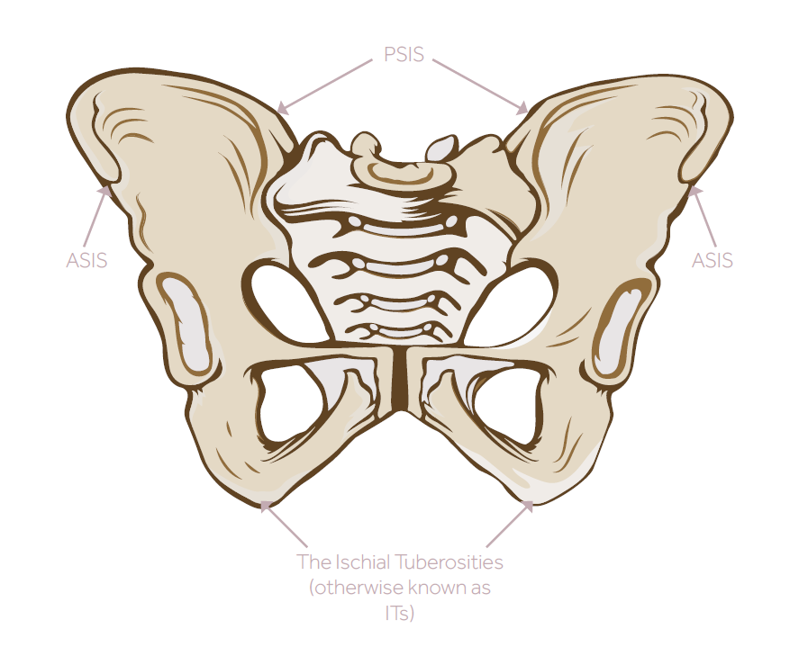 Labelled diagram of the human pelvis